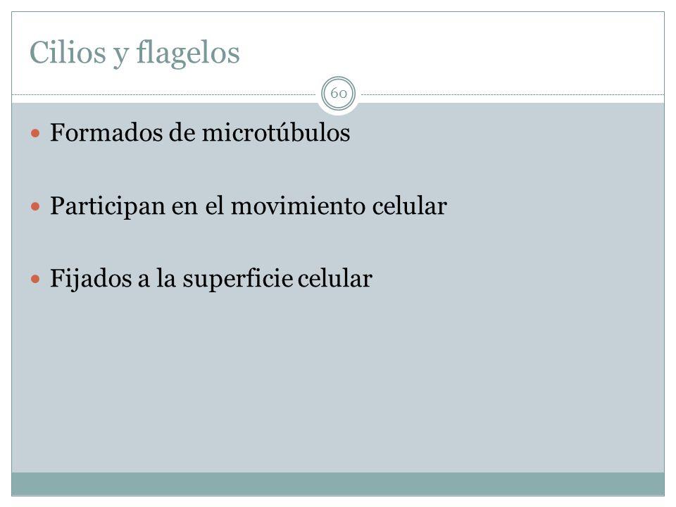 Cilios y flagelos Formados de microtúbulos