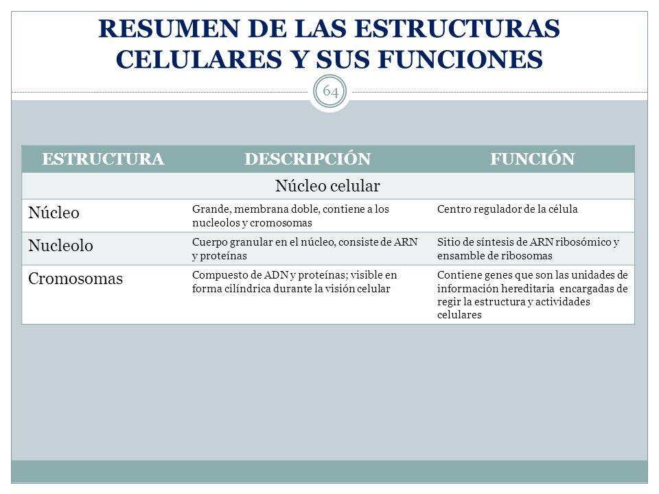 RESUMEN DE LAS ESTRUCTURAS CELULARES Y SUS FUNCIONES