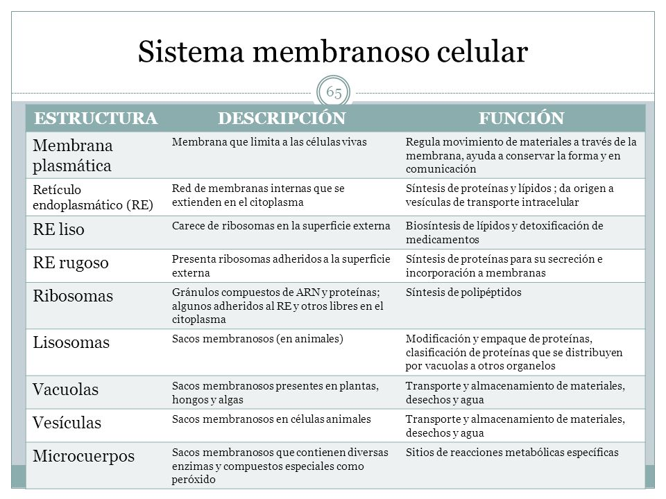 Sistema membranoso celular