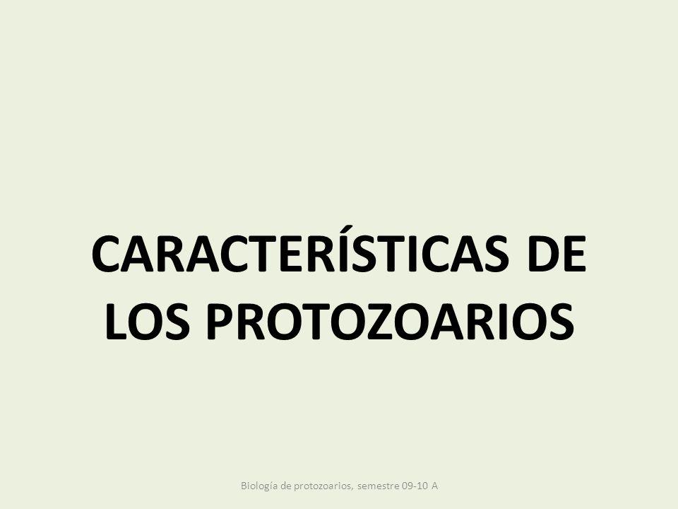 CARACTERÍSTICAS DE LOS PROTOZOARIOS