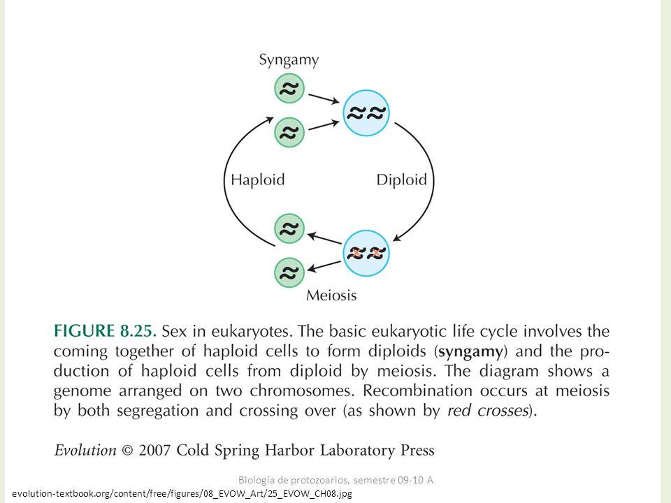 Biología de protozoarios, semestre 09-10 A