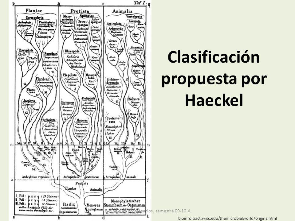 Clasificación propuesta por Haeckel
