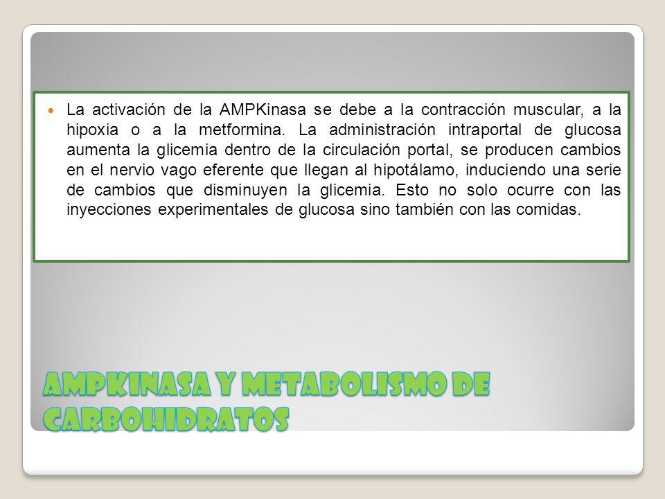 AMPKinasa Y METABOLISMO DE CARBOHIDRATOS