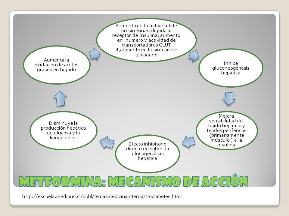 Metformina: mecanismo de acción