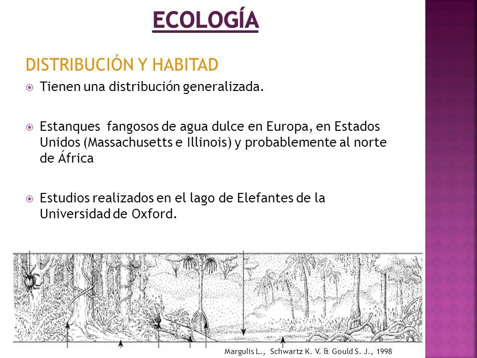 Ecología DISTRIBUCIÓN Y HABITAD Tienen una distribución generalizada.