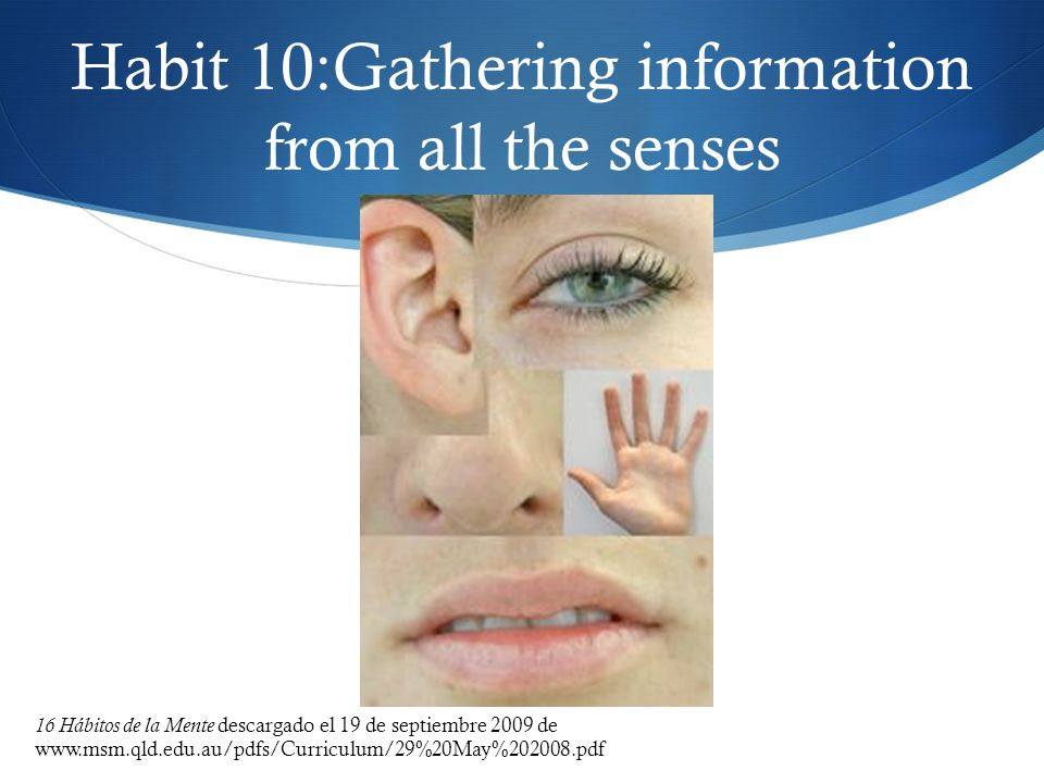 Habit 10:Gathering information from all the senses