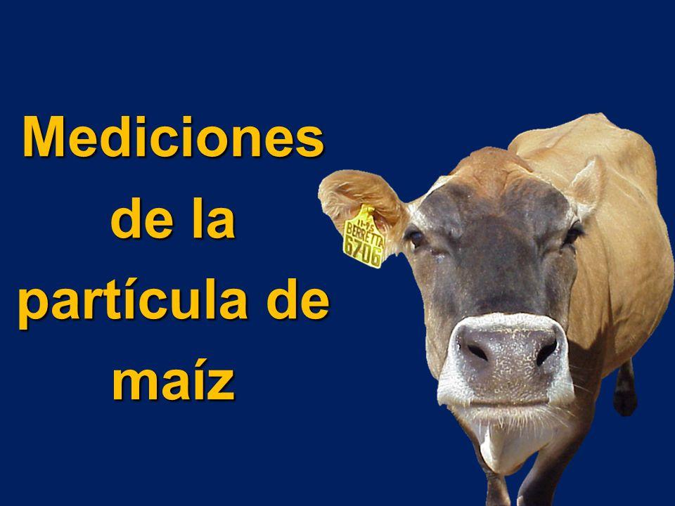 Mediciones de la partícula de maíz
