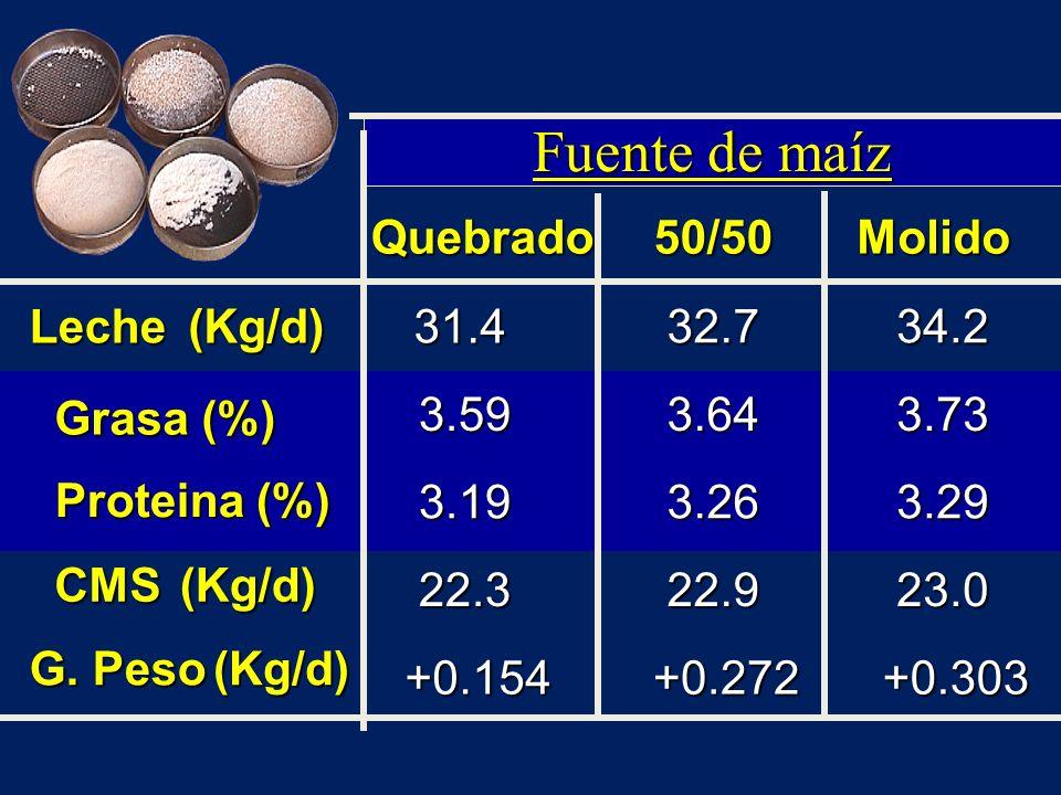 Fuente de maíz Quebrado 50/50 Molido Leche (Kg/d) 31.4 32.7 34.2