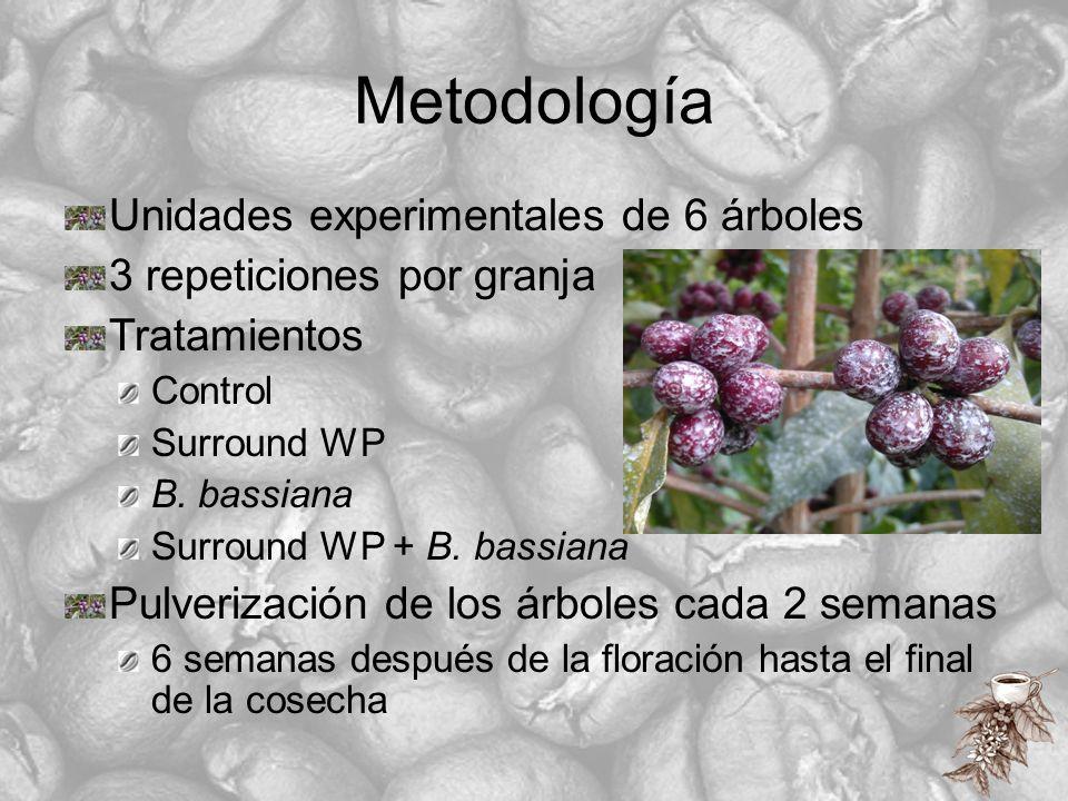Metodología Unidades experimentales de 6 árboles
