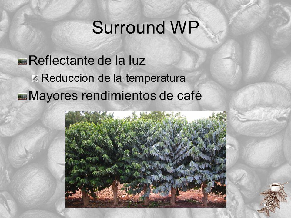 Surround WP Reflectante de la luz Mayores rendimientos de café