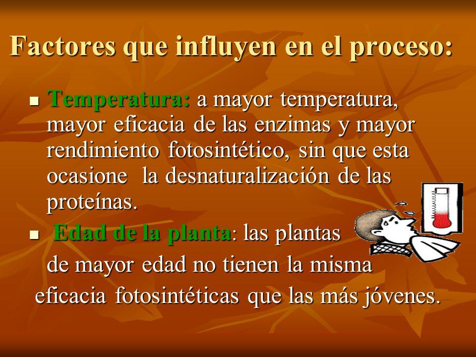 Factores que influyen en el proceso: