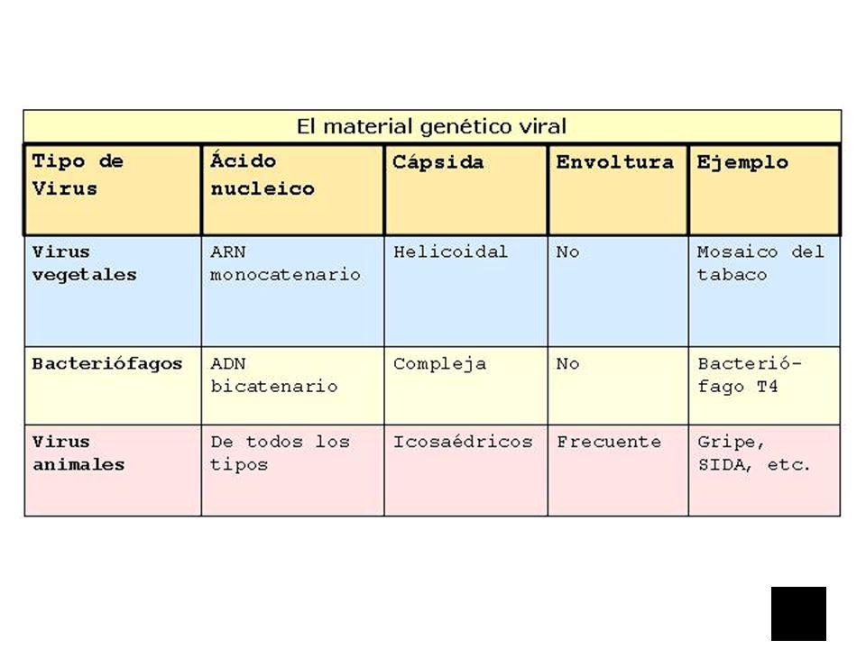Cuadro Comparativo de Virus