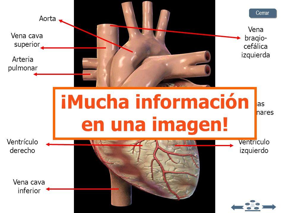 ¡Mucha información en una imagen!