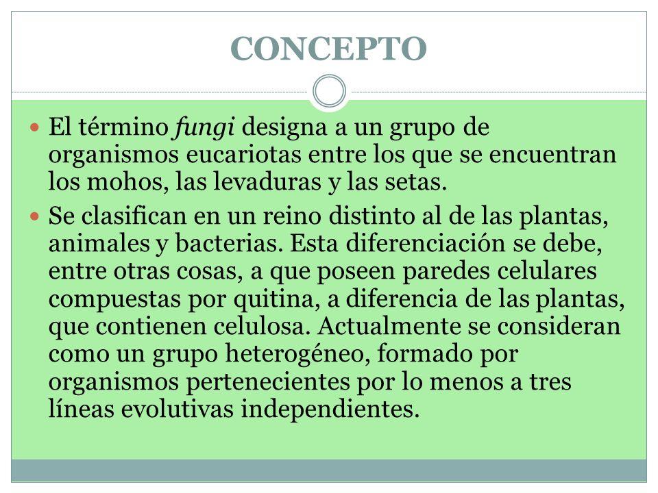CONCEPTO El término fungi designa a un grupo de organismos eucariotas entre los que se encuentran los mohos, las levaduras y las setas.