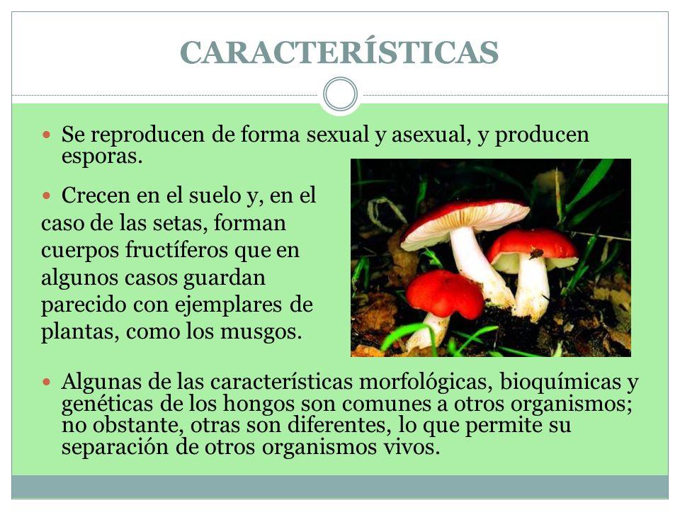 CARACTERÍSTICAS Se reproducen de forma sexual y asexual, y producen esporas. Crecen en el suelo y, en el.