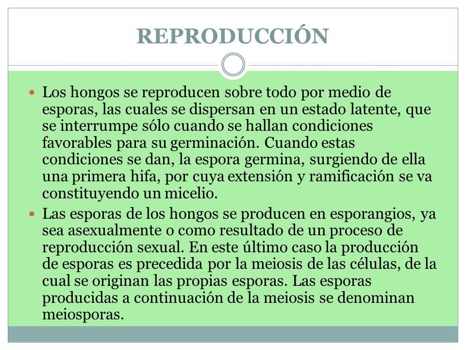REPRODUCCIÓN
