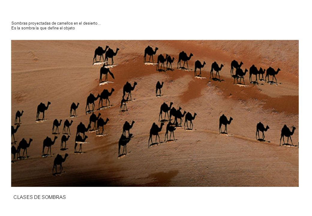 CLASES DE SOMBRAS Sombras proyectadas de camellos en el desierto…