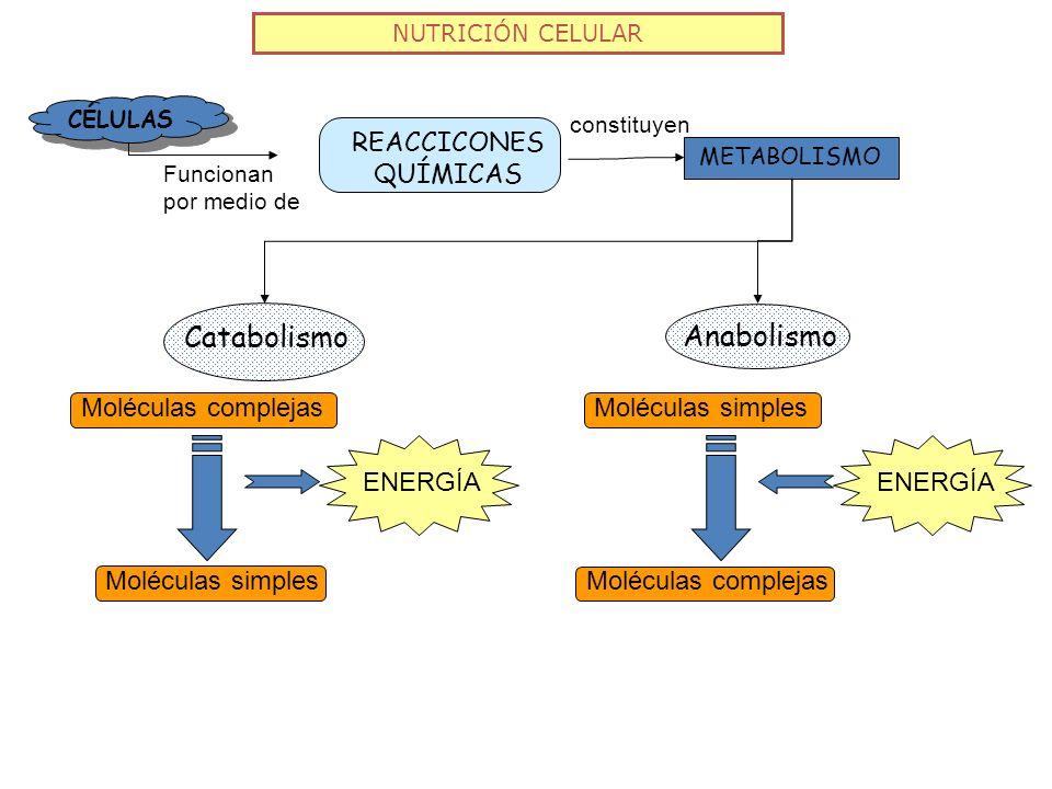 Catabolismo Anabolismo REACCICONES QUÍMICAS Moléculas complejas