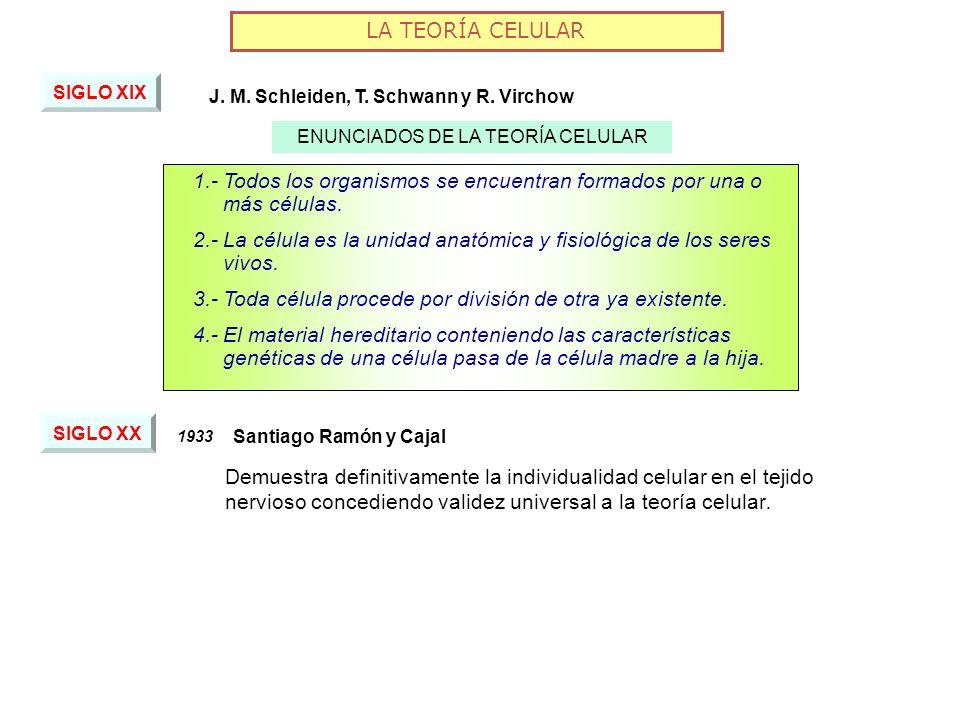 ENUNCIADOS DE LA TEORÍA CELULAR