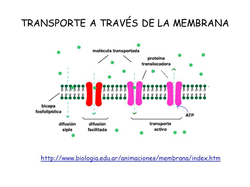 TRANSPORTE A TRAVÉS DE LA MEMBRANA