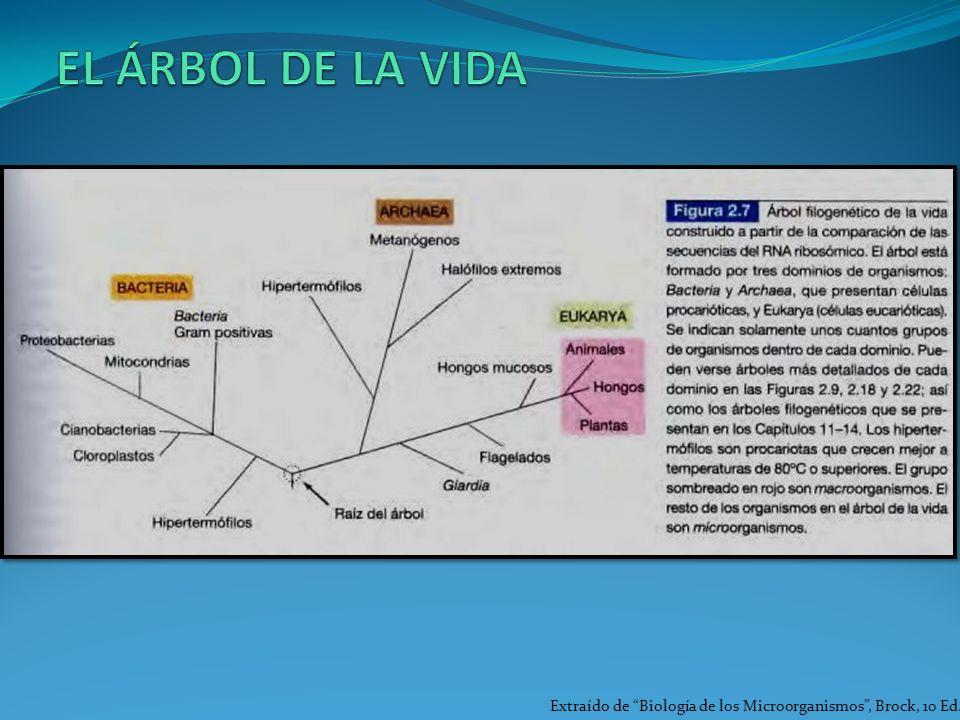 EL ÁRBOL DE LA VIDA Extraído de Biología de los Microorganismos , Brock, 10 Ed.