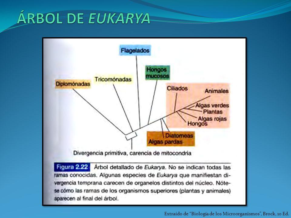 ÁRBOL DE EUKARYA Extraído de Biología de los Microorganismos , Brock, 10 Ed.