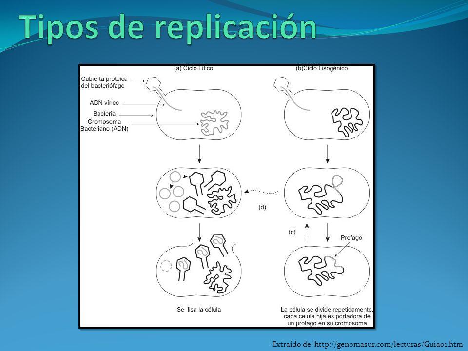 Tipos de replicación Extraído de: http://genomasur.com/lecturas/Guia01.htm