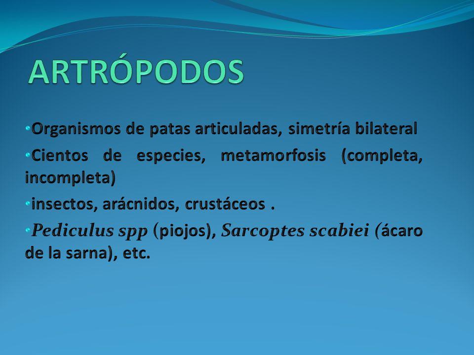 ARTRÓPODOS Organismos de patas articuladas, simetría bilateral