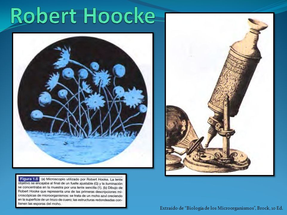 Robert Hoocke Extraído de Biología de los Microorganismos , Brock, 10 Ed.