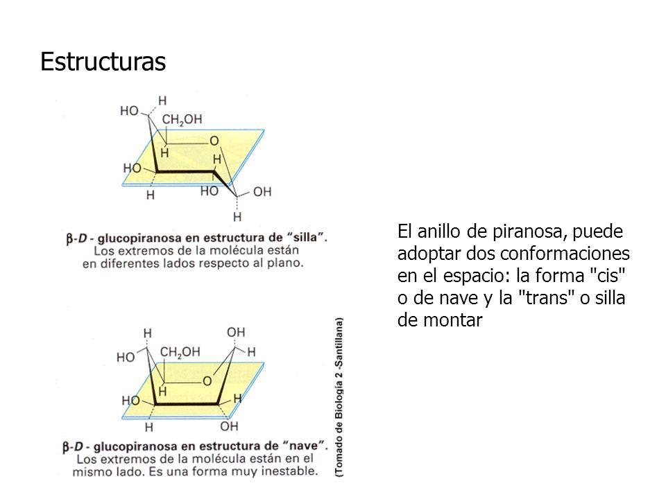 Estructuras El anillo de piranosa, puede adoptar dos conformaciones en el espacio: la forma cis o de nave y la trans o silla de montar.