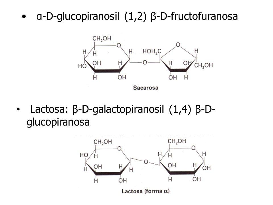 α-D-glucopiranosil (1,2) β-D-fructofuranosa