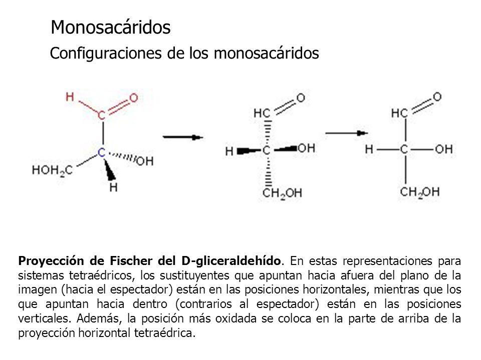 Monosacáridos Monosacáridos Configuraciones de los monosacáridos