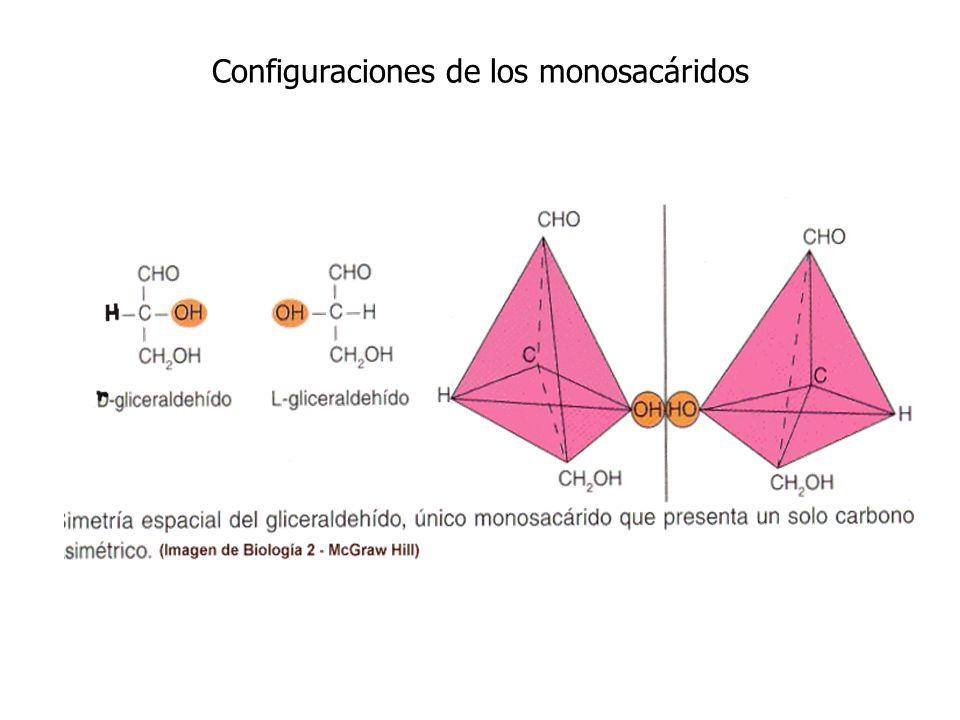 Configuraciones de los monosacáridos