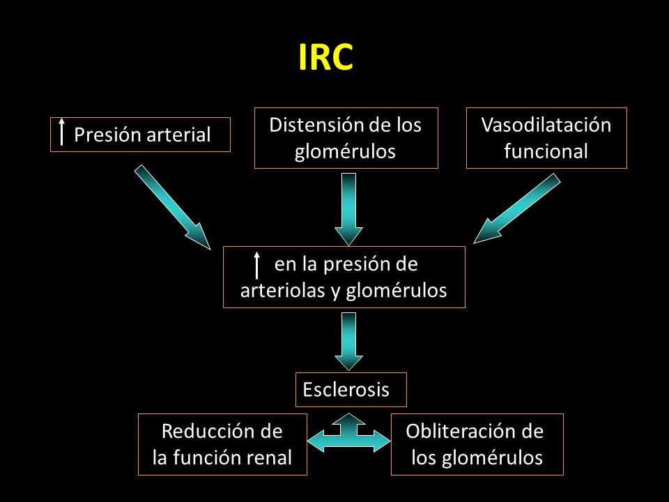 arteriolas y glomérulos
