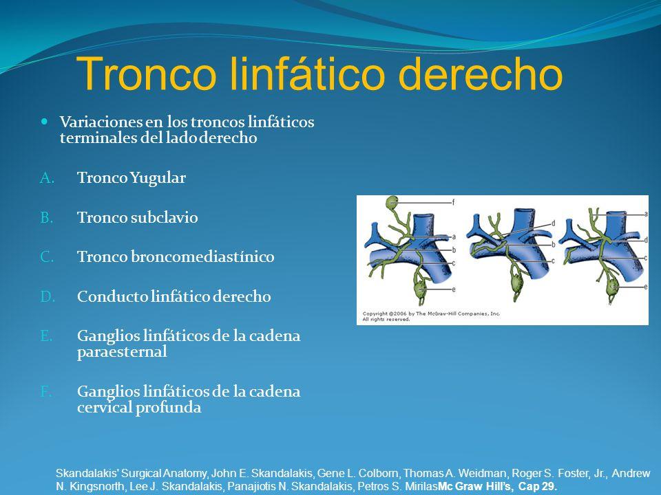 Tronco linfático derecho
