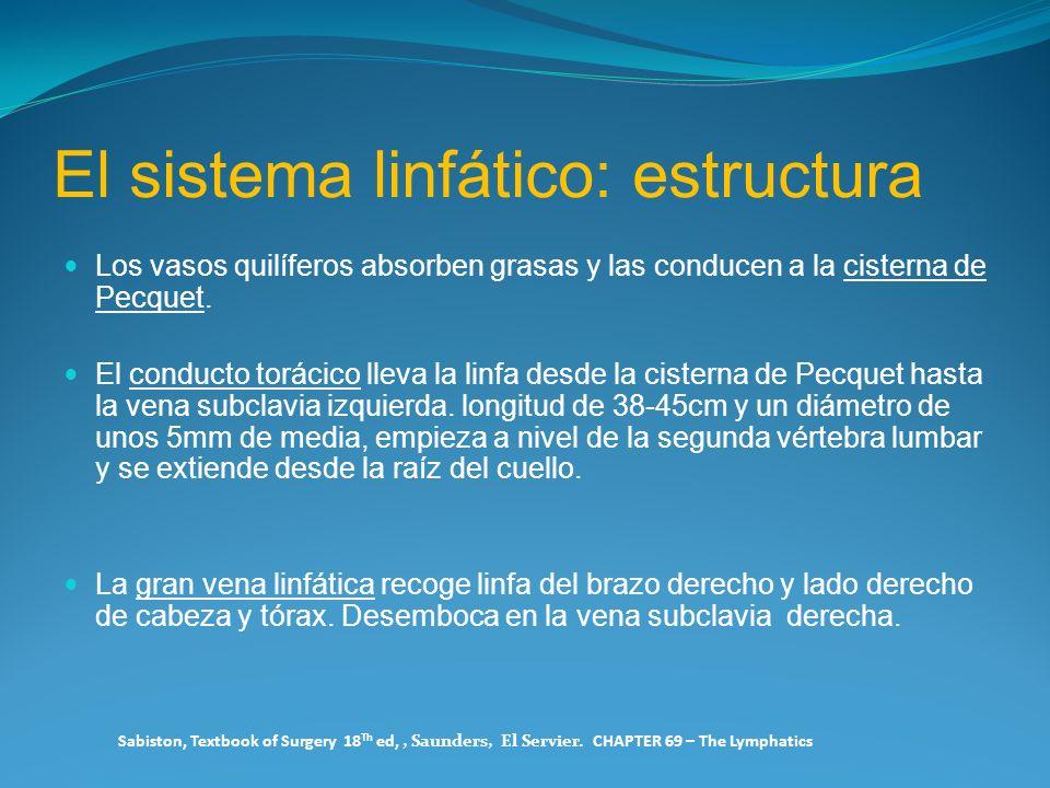 El sistema linfático: estructura