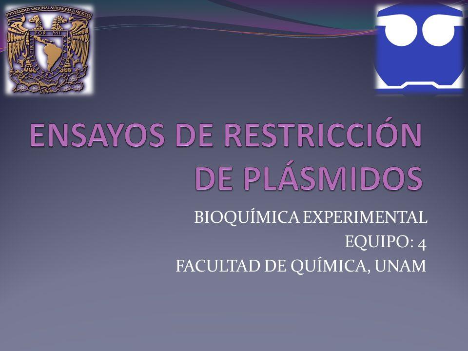 ENSAYOS DE RESTRICCIÓN DE PLÁSMIDOS