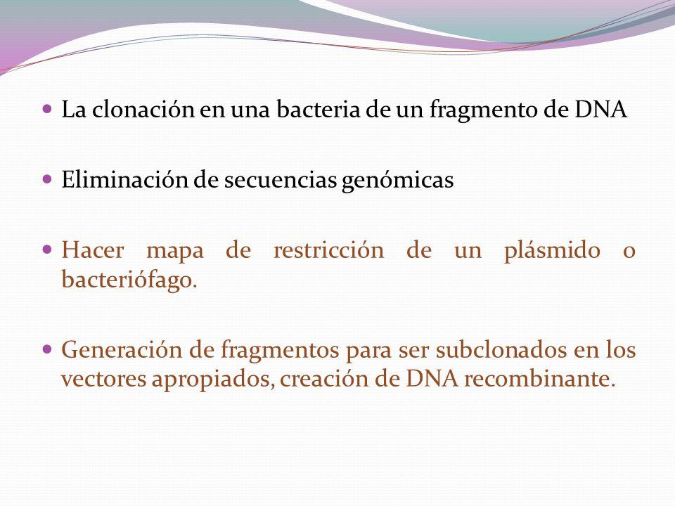 La clonación en una bacteria de un fragmento de DNA