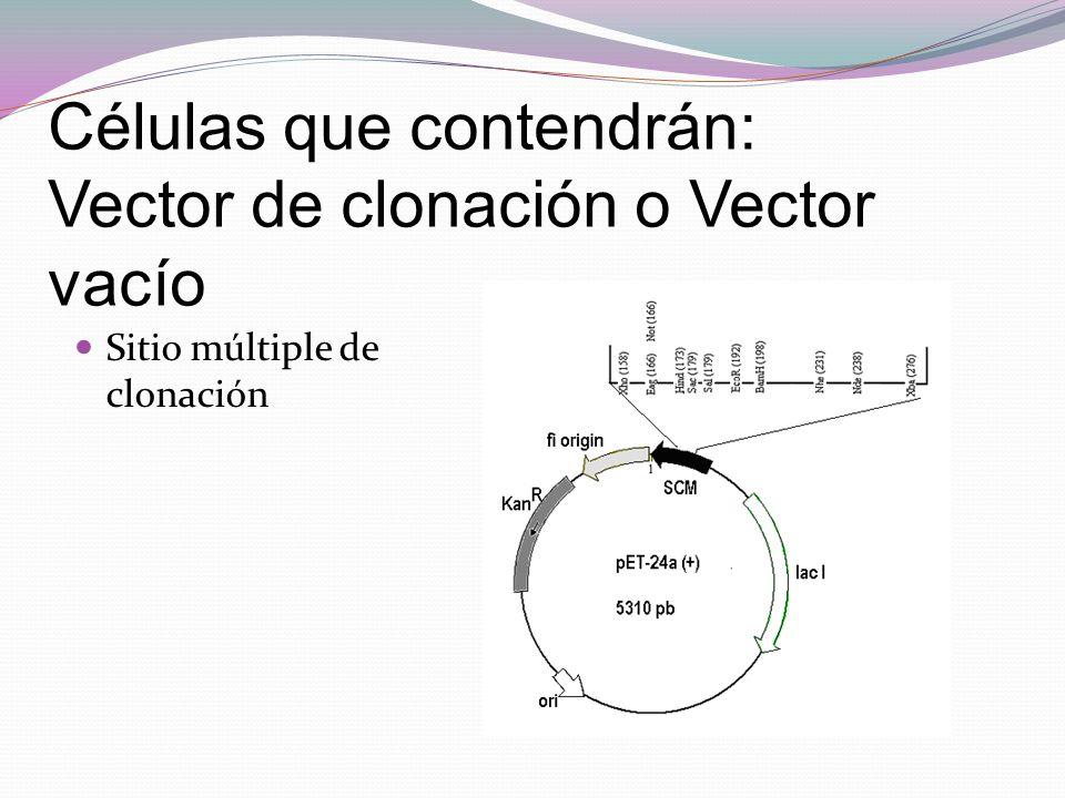 Células que contendrán: Vector de clonación o Vector vacío