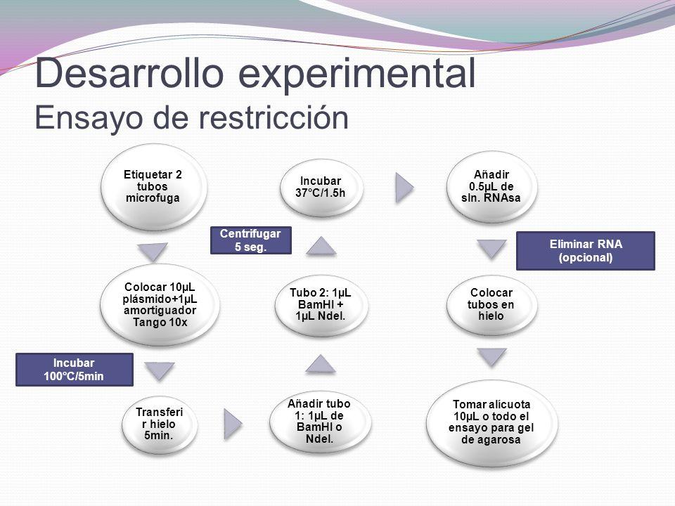 Desarrollo experimental Ensayo de restricción