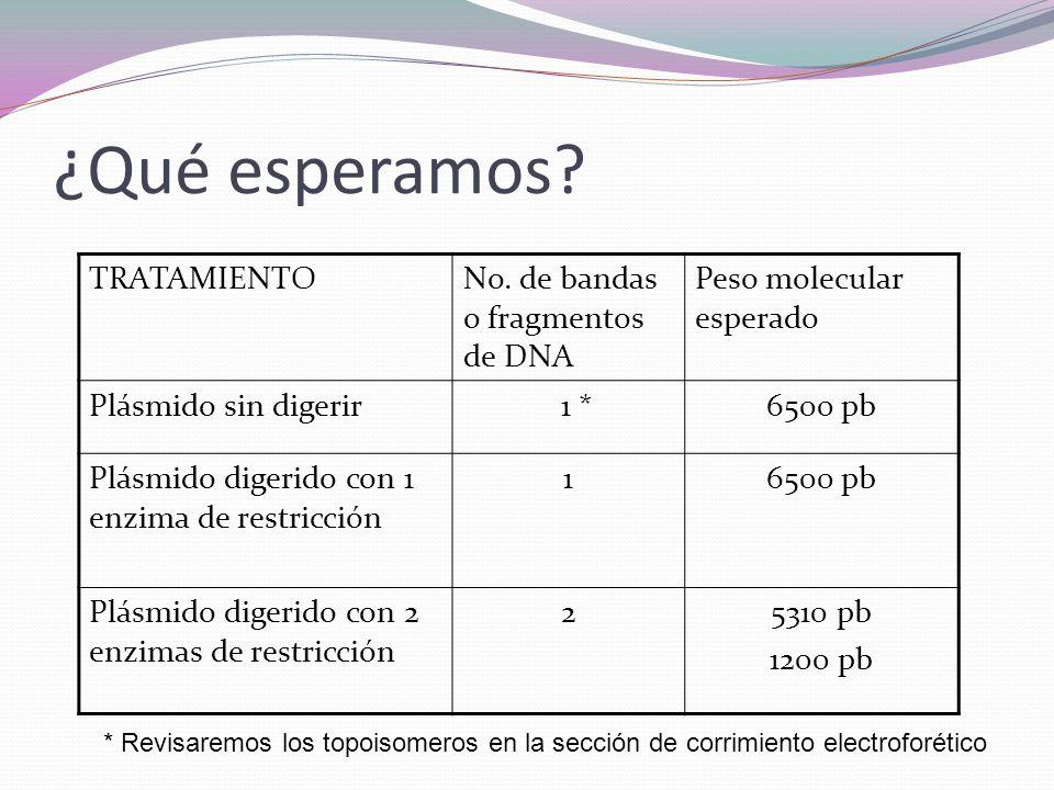 ¿Qué esperamos TRATAMIENTO No. de bandas o fragmentos de DNA
