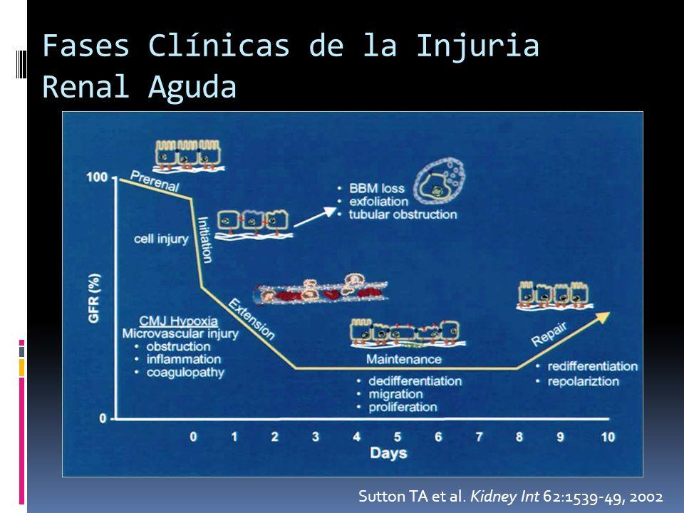 Fases Clínicas de la Injuria Renal Aguda