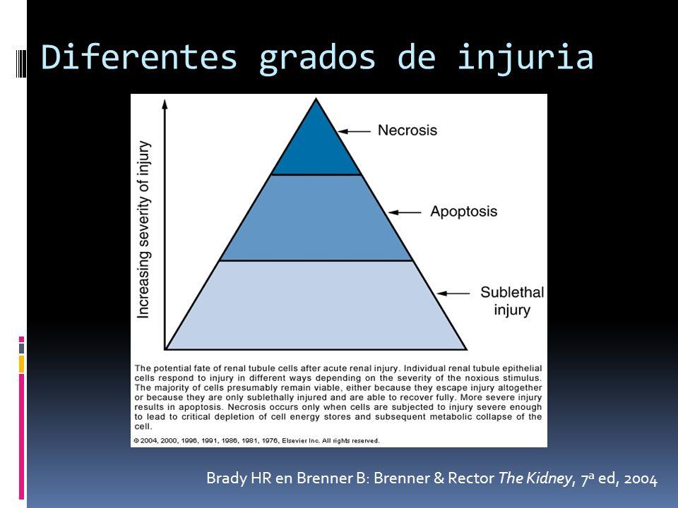 Diferentes grados de injuria