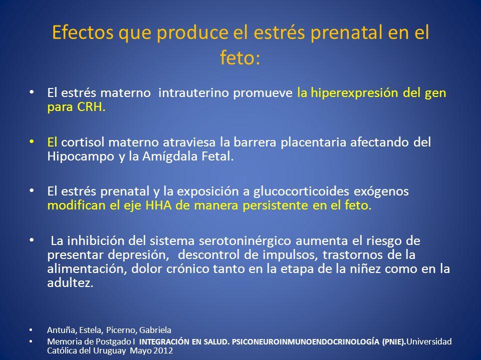 Efectos que produce el estrés prenatal en el feto: