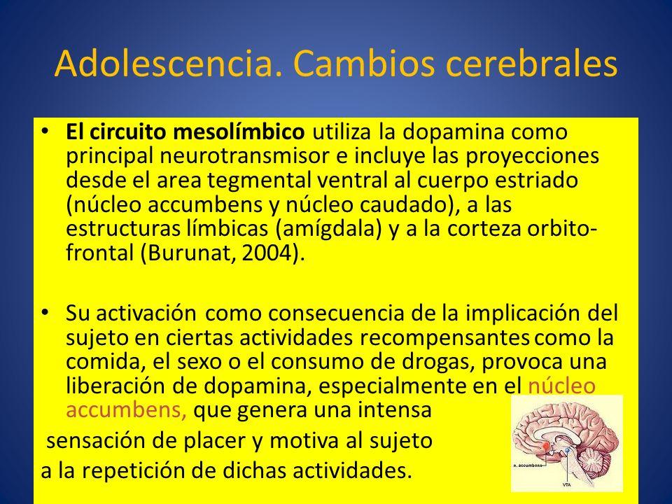 Adolescencia. Cambios cerebrales