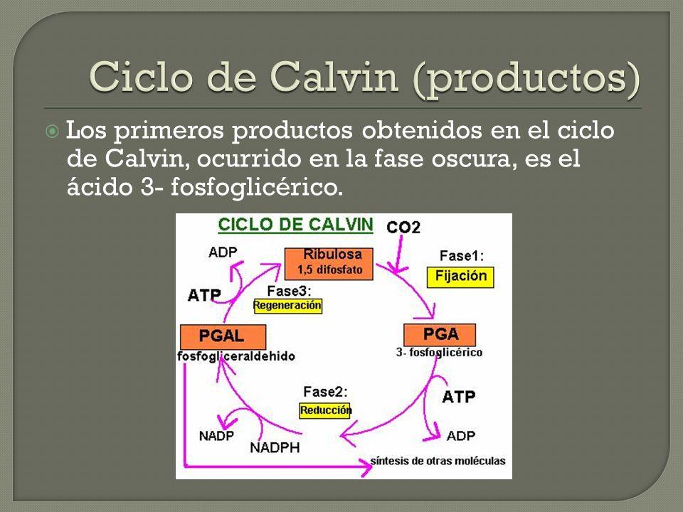 Ciclo de Calvin (productos)