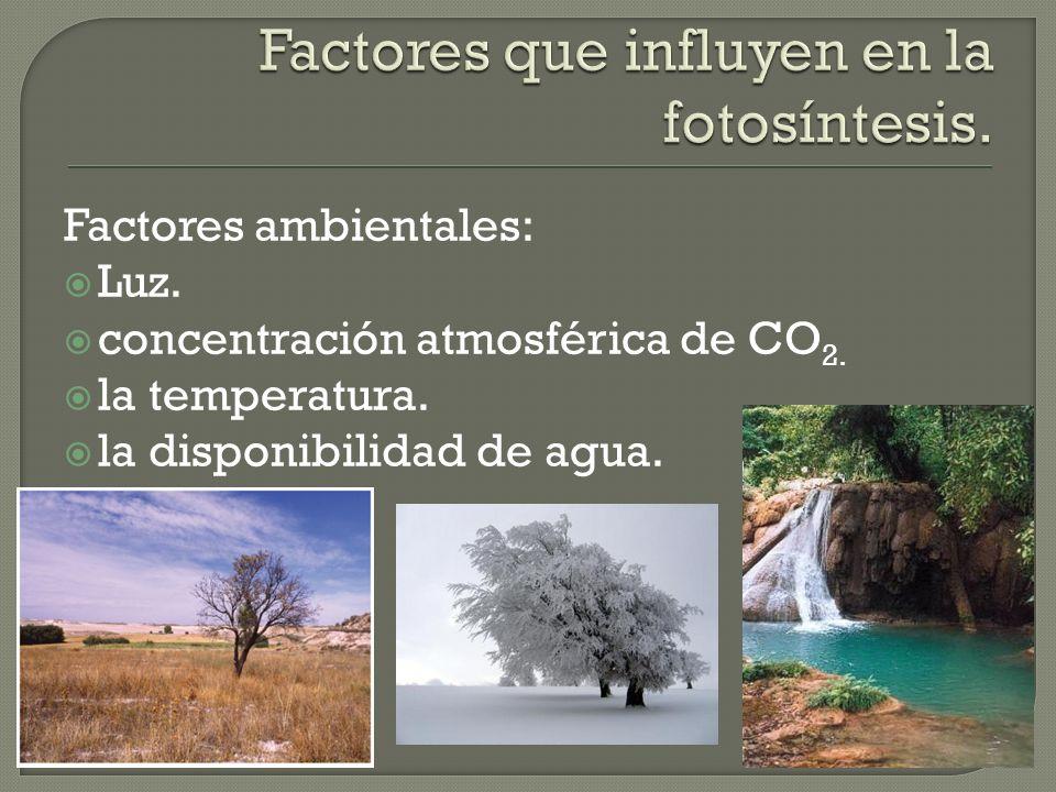 Factores que influyen en la fotosíntesis.