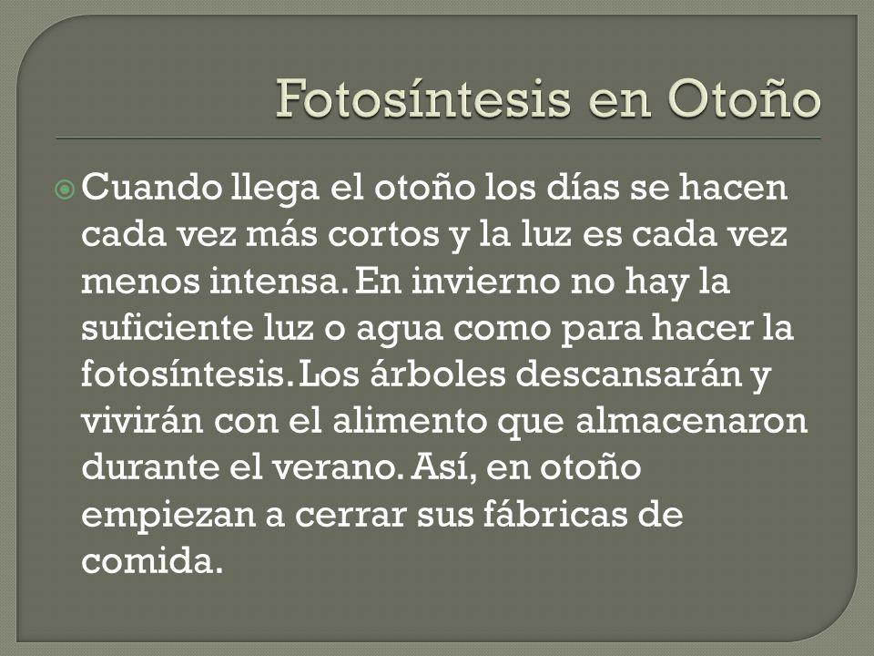 Fotosíntesis en Otoño