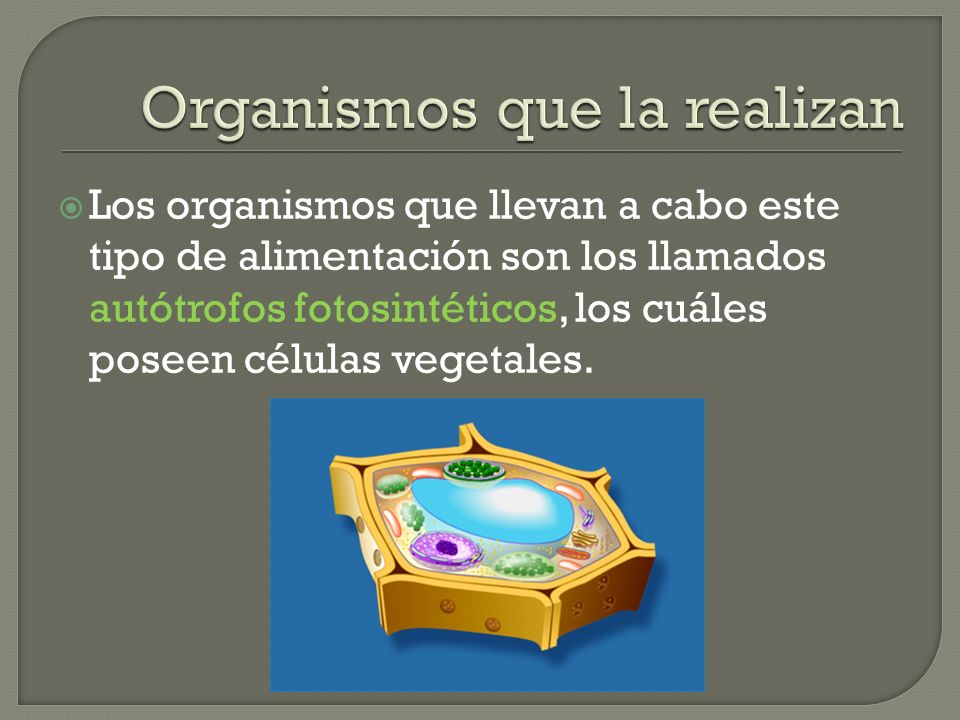 Organismos que la realizan