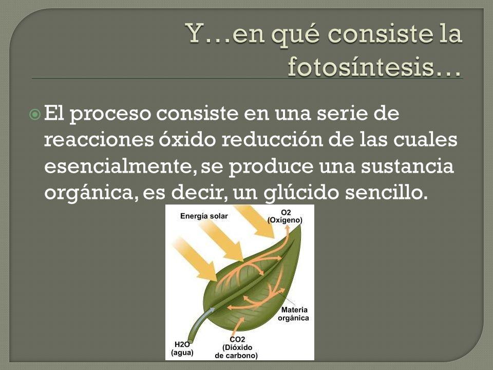 Y…en qué consiste la fotosíntesis…